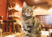 「保護猫カフェ協会」が猫の日に設立 殺処分を減らすための譲渡を知ってほしい