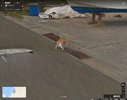 画像:怪しいやつだワン 種子島のワンコ、ストリートビュー車両を猛然と追いかける