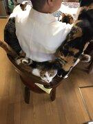 住職の椅子にぎゅうぎゅう詰め ご飯時におすそ分けを待つお寺の猫が可愛いと話題に