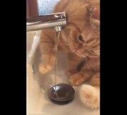 手で狙いを定めて…飲めないニャ 頭で水をブロックして飲めない猫が可愛いと話題に
