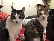 大阪地震で猫の脱走相次ぐ 網戸を破ったりベランダから飛び降りたり…SNSで情報提供求める
