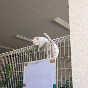 フェンスの上でアクロバティックな大股開き まさかの体勢で寝る猫が目撃される