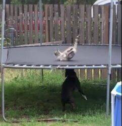 画像:上と下とで適材適所のトランポリン、犬が弾めば猫も弾むよ