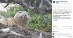 画像は「Hawaiian Monk Seal Research Program」Facebookスクリーンショット