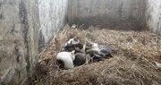 藁を背に体を丸める眠り猫、空き部屋占拠し集団睡眠
