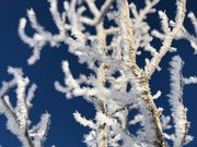 長野県・白馬で樹霜 極寒地域の冬の風物詩