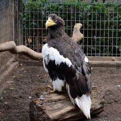 画像:上野動物園や多摩動物公園が鳥類の展示を中止 東京のオオタカから高病原性鳥インフル