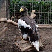 上野動物園や多摩動物公園が鳥類の展示を中止 東京のオオタカから高病原性鳥インフル