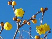 日差しポカポカ 花もスクスク