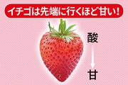 旬のおいしいイチゴの見分け方と食べ方