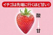 おいしいイチゴの見分け方&食べ方