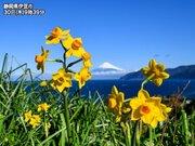 花々も季節を先取り?太平洋側ではスイセンやレンゲソウが綻ぶ