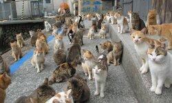 """画像:""""猫の島""""にエサが届きすぎて発送停止を呼びかけ エサ不足のSOSに全国から大量のキャットフード/画像は猫の島 青島(@aoshima_cat)さんのTwitterより"""