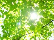 12月→3月で2時間も昼延長!?「気温の春」より早い「光の春」とは