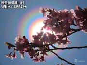 関東は吹き荒れる北風で花粉が大量飛散