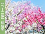 【七十二候】桃始笑 桃が笑う…?