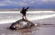 """クジラの上でガッツポーズで批判殺到の写真コンテスト 最優秀賞は""""該当作品なし""""に"""