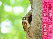 今日は二十四節気「春分」・七十二候「雀始巣」