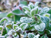 霜の降りた朝 各地で冷え込み強まる