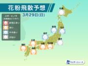 3月29日(日)の花粉飛散予想 西日本や東海で多く飛散