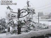 関東甲信山沿いで積雪20cm 東京も多摩地方で雪に変わる