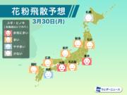 3月30日(月)の花粉飛散予想 東京や大阪などで非常に多い