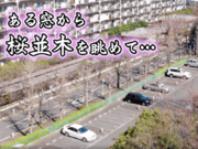 桜動画 ある窓から見た20日間の桜並木の様子