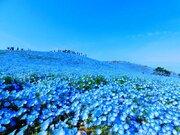 春限定の「青の絶景」「空と繋がる丘」とは?