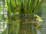 二十四節気「立夏」 七十二候「蛙始鳴」