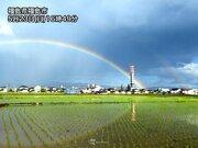 通り雨の後に鮮やかな虹 田んぼの水面も七色に