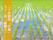 二十四節気「芒種」 種まきや田植えなど、始まりの季節