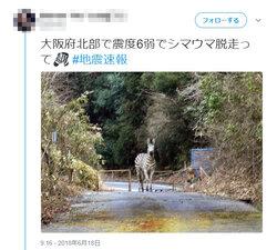 画像:大阪地震で「シマウマ脱走」のデマ拡散 「未確認の情報をむやみに拡散しないで」大阪府が呼びかけ