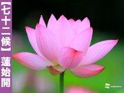 【蓮始開】仏教とも深い関わりがある美しき花とは…?