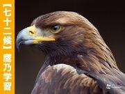 【鷹乃学習】一人前になるべく、邁進中!な鳥たち