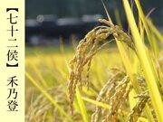 七十二候「禾乃登」 この時期は要注意 農作物にとっての厄日とは