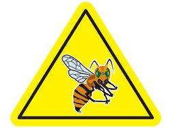 画像:例年になく攻撃的なスズメバチ、遭遇したときの対処法