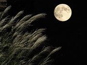 24日(月)は中秋の名月 広範囲で雲の隙間からお月見チャンス