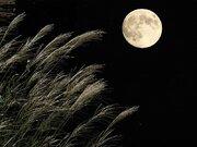 10月1日(木)は中秋の名月 秋の夜長にお月見を楽しもう