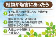台風による植物の塩害対策とアフターケア