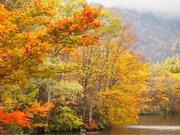 東北・北海道からフォトジェニックな鮮やか紅葉