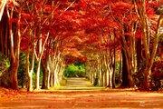 冬へと続く、紅葉のトンネル