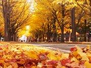 紅葉シーズンピーク 北海道大学の紅葉絶景