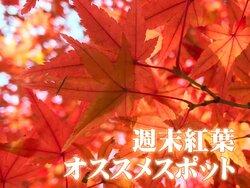 画像:【紅葉】おすすめスポット(11月10日〜11日)