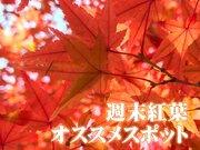 【紅葉】おすすめスポット(11月10日〜11日)