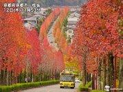 週末は関東など各地で晴天 東北南部から西日本は紅葉が見頃に