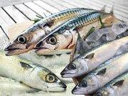今や高級魚? 知っておくと便利なサバの種類
