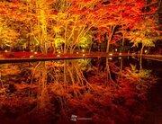 夜の紅葉絶景 水鏡に映える木々 ~岐阜・曽木公園~