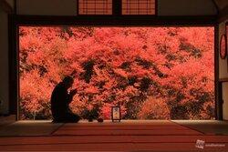 画像:まるで1枚の絵、座敷越しの紅葉絶景(兵庫・安国寺)