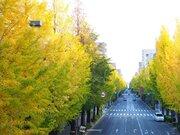 今年は紅葉ドライブ 3連休は東京近郊も見頃へ