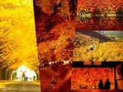 目前が一色に!この秋見られた一面の紅葉絶景